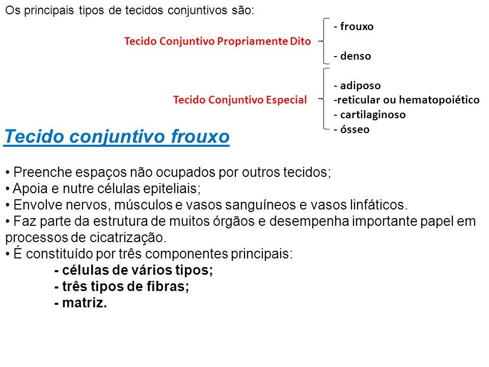 - frouxo Tecido Conjuntivo Propriamente Dito - denso - adiposo Tecido Conjuntivo Especial -reticular ou hematopoiético - cartilaginoso - ósseo Preench