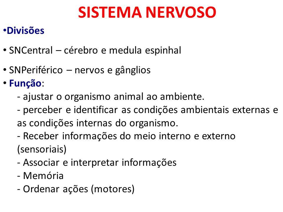 SISTEMA NERVOSO Divisões SNCentral – cérebro e medula espinhal SNPeriférico – nervos e gânglios Função: - ajustar o organismo animal ao ambiente. - pe