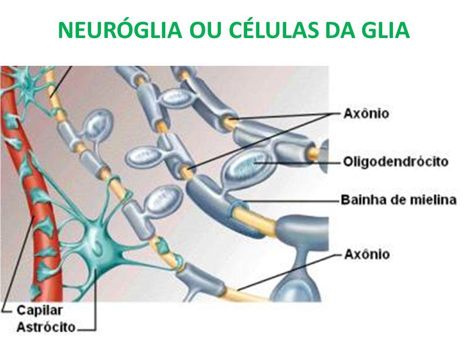 Células da Glia Também chamadas de neuróglia Menores que os neurônios Mais numerosas Várias funções: - Sustentação do tecido - Produção de mielina - Remoção de excretas - Fornecimento de substancias nutritivas aos neurônios - Fagocitose de restos celulares - Isolamento dos neurônios