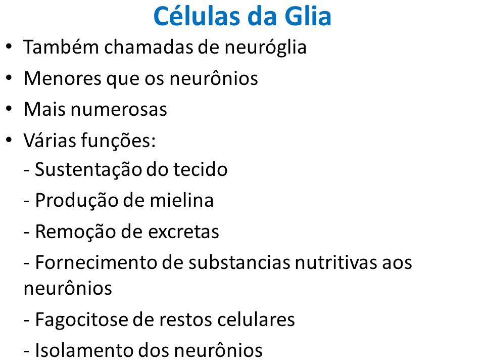 Células da Glia Também chamadas de neuróglia Menores que os neurônios Mais numerosas Várias funções: - Sustentação do tecido - Produção de mielina - R