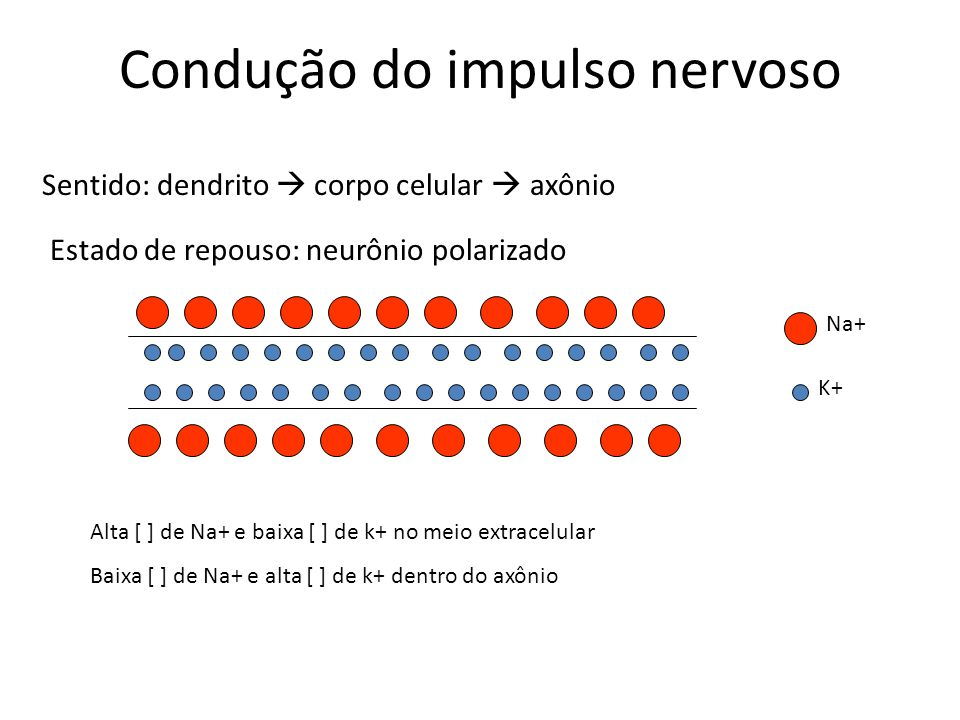 Condução do impulso nervoso Na presença de estímulo – despolarização da membrana, aumento de permeabilidade da membrana pelo Na+ e entrada deste no axônio Na+ K+ - - - - - - - - - - - + + + + + + + + - - - - - - - - + + + + + + + + - - - - - - - - - - + + + + + +