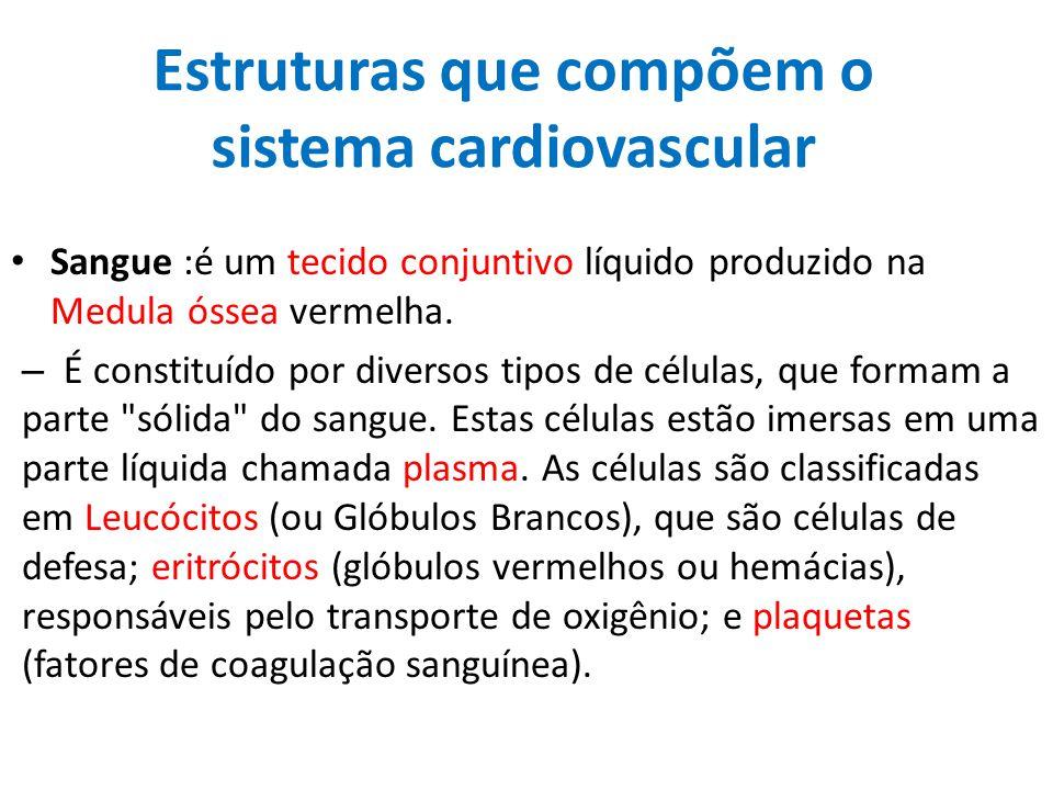 Estruturas que compõem o sistema cardiovascular Sangue :é um tecido conjuntivo líquido produzido na Medula óssea vermelha. – É constituído por diverso