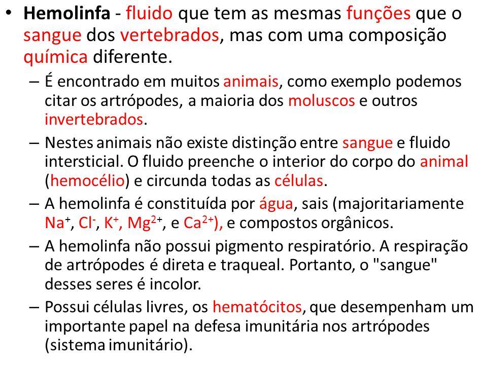 Hemolinfa - fluido que tem as mesmas funções que o sangue dos vertebrados, mas com uma composição química diferente. – É encontrado em muitos animais,