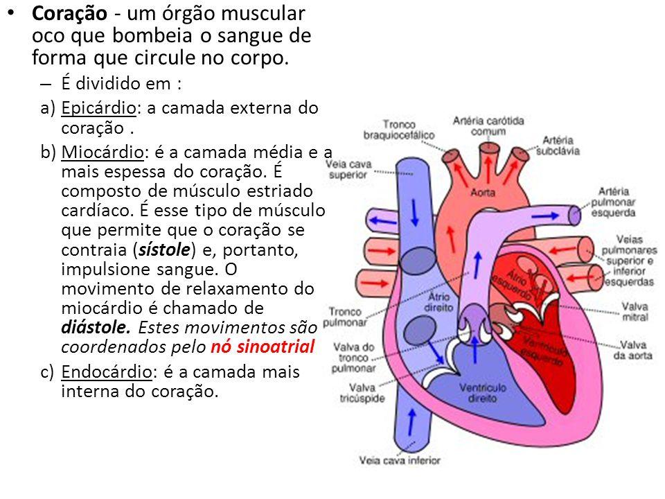 Coração - um órgão muscular oco que bombeia o sangue de forma que circule no corpo. – É dividido em : a)Epicárdio: a camada externa do coração. b)Mioc
