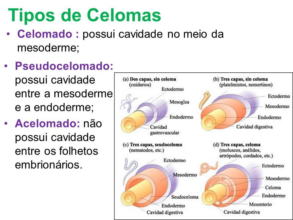 Tipos de Celomas Celomado : possui cavidade no meio da mesoderme; Pseudocelomado: possui cavidade entre a mesoderme e a endoderme; Acelomado: não poss