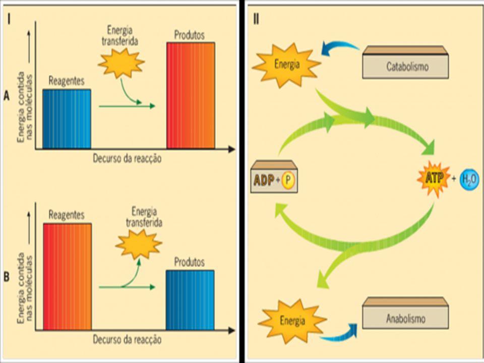 Metabolismo Energético Celular Reações químicas entre moléculas reagentes dão origem ao produto. Reações endergônicas: precisam receber energia. Ganha