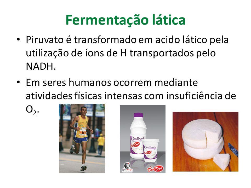 Fermentação lática Piruvato é transformado em acido lático pela utilização de íons de H transportados pelo NADH. Em seres humanos ocorrem mediante ati