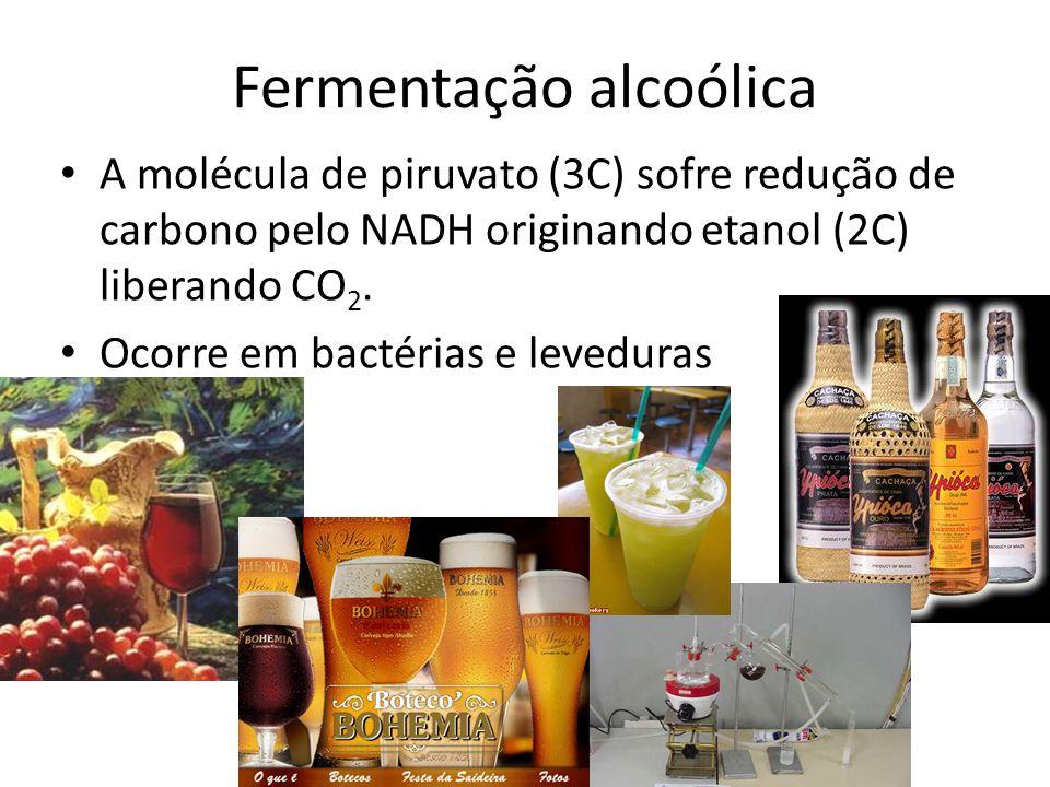 Fermentação alcoólica A molécula de piruvato (3C) sofre redução de carbono pelo NADH originando etanol (2C) liberando CO 2. Ocorre em bactérias e leve