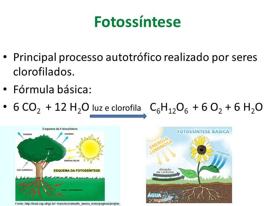 Fotossíntese Principal processo autotrófico realizado por seres clorofilados. Fórmula básica: 6 CO 2 + 12 H 2 O luz e clorofila C 6 H 12 O 6 + 6 O 2 +