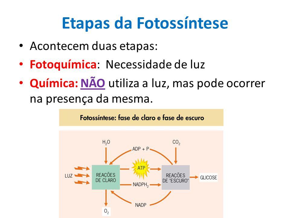 Etapas da Fotossíntese Acontecem duas etapas: Fotoquímica: Necessidade de luz Química: NÃO utiliza a luz, mas pode ocorrer na presença da mesma.