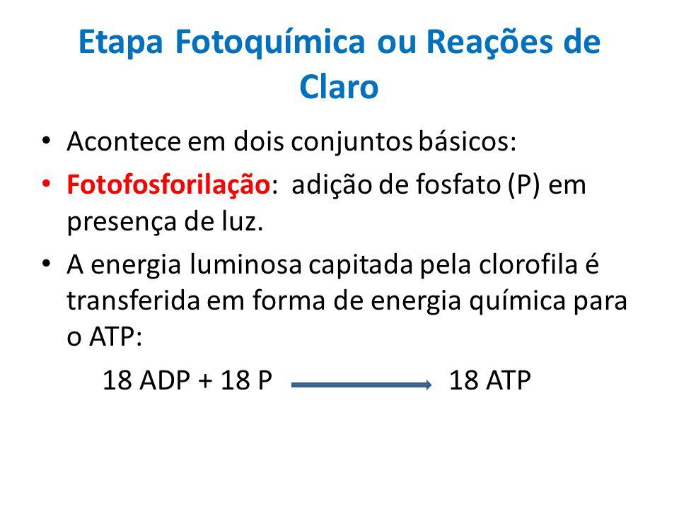 Etapa Fotoquímica ou Reações de Claro Acontece em dois conjuntos básicos: Fotofosforilação: adição de fosfato (P) em presença de luz. A energia lumino