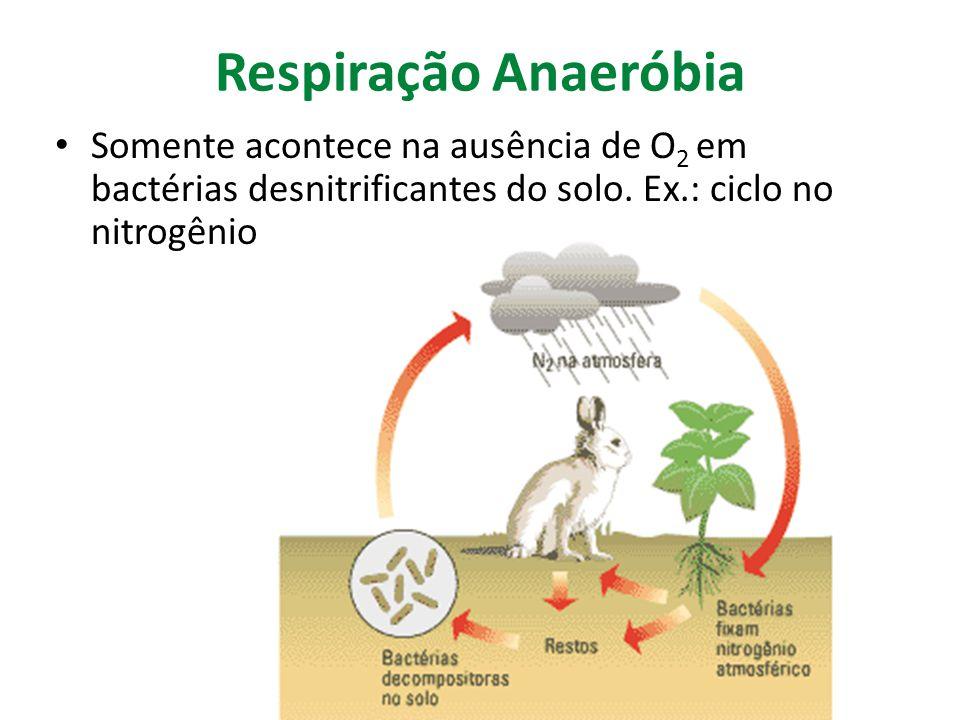 Respiração Anaeróbia Somente acontece na ausência de O 2 em bactérias desnitrificantes do solo. Ex.: ciclo no nitrogênio