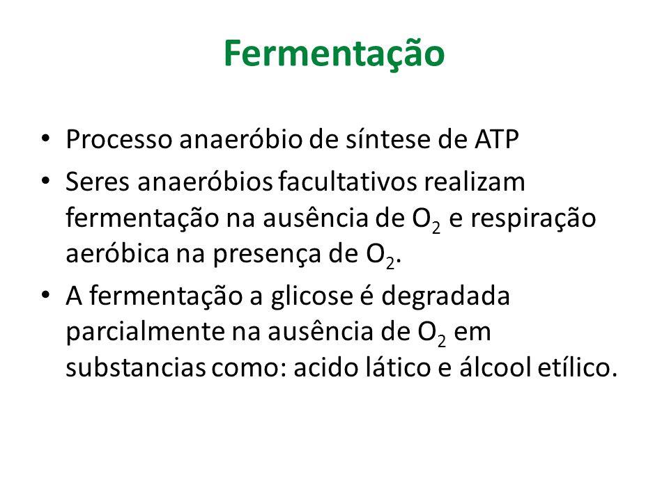 Fermentação Processo anaeróbio de síntese de ATP Seres anaeróbios facultativos realizam fermentação na ausência de O 2 e respiração aeróbica na presen