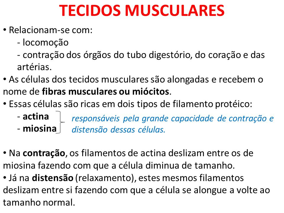 TECIDOS MUSCULARES Relacionam-se com: - locomoção - contração dos órgãos do tubo digestório, do coração e das artérias. As células dos tecidos muscula