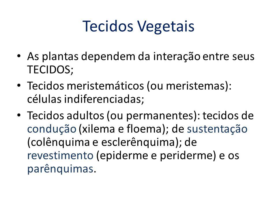 Tecidos Vegetais As plantas dependem da interação entre seus TECIDOS; Tecidos meristemáticos (ou meristemas): células indiferenciadas; Tecidos adultos (ou permanentes): tecidos de condução (xilema e floema); de sustentação (colênquima e esclerênquima); de revestimento (epiderme e periderme) e os parênquimas.