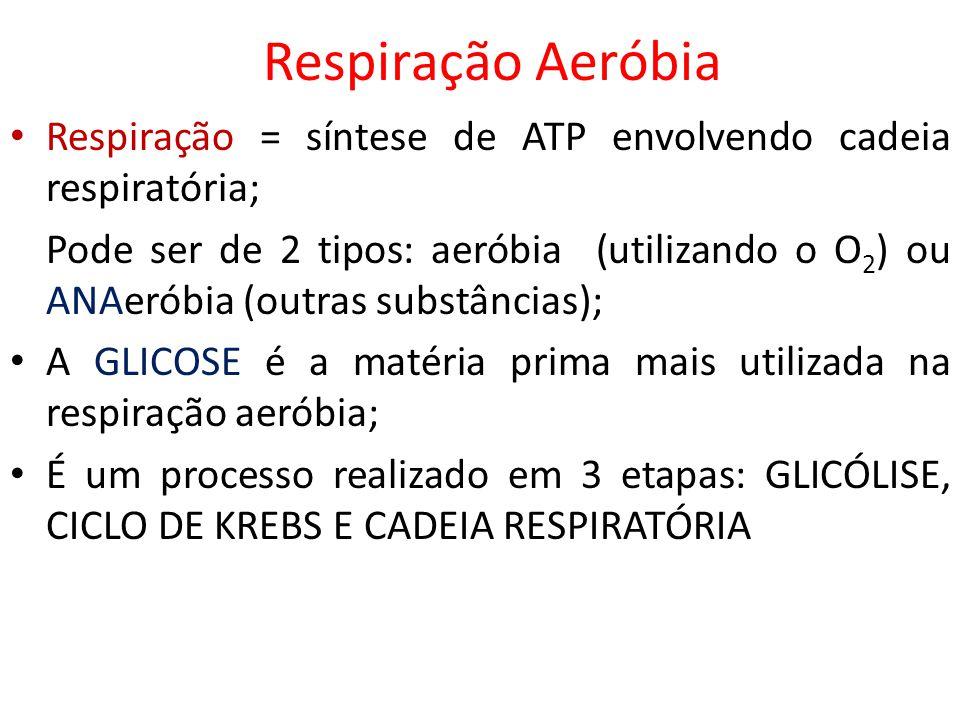 Respiração Aeróbia Respiração = síntese de ATP envolvendo cadeia respiratória; Pode ser de 2 tipos: aeróbia (utilizando o O 2 ) ou ANAeróbia (outras s