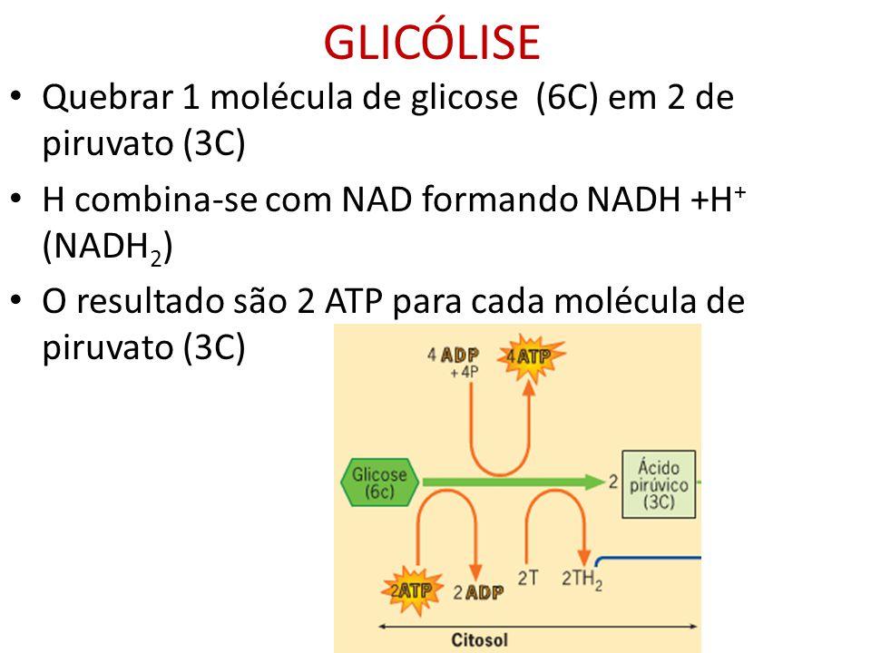 GLICÓLISE Quebrar 1 molécula de glicose (6C) em 2 de piruvato (3C) H combina-se com NAD formando NADH +H + (NADH 2 ) O resultado são 2 ATP para cada m