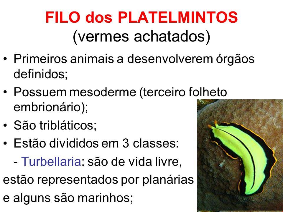 FILO dos PLATELMINTOS (vermes achatados) Primeiros animais a desenvolverem órgãos definidos; Possuem mesoderme (terceiro folheto embrionário); São tri