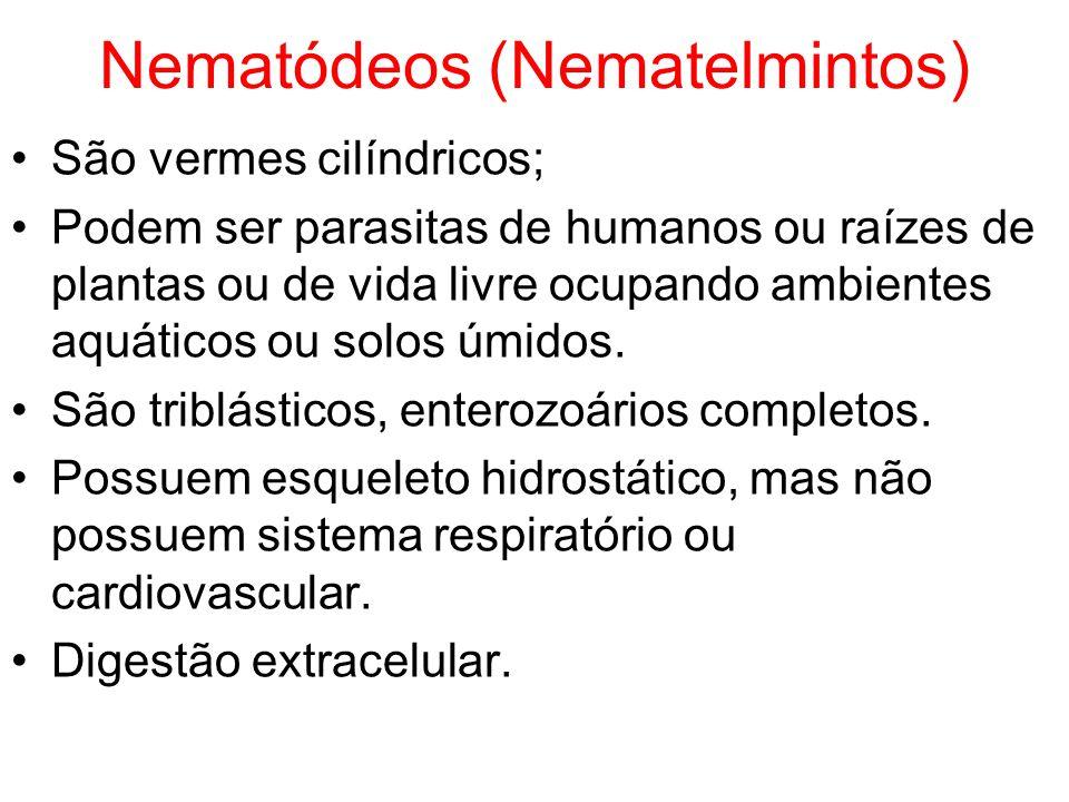 Nematódeos (Nematelmintos) São vermes cilíndricos; Podem ser parasitas de humanos ou raízes de plantas ou de vida livre ocupando ambientes aquáticos o