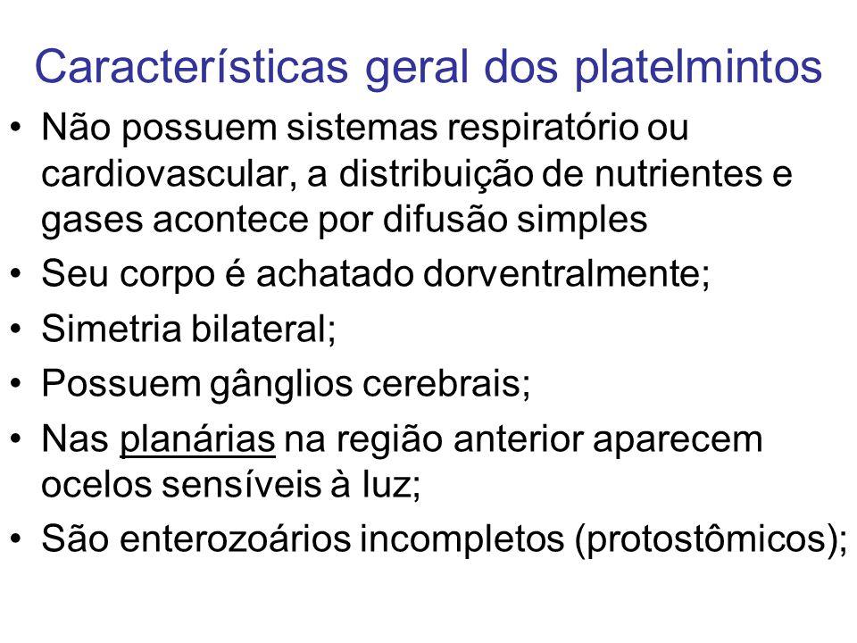 Características geral dos platelmintos Não possuem sistemas respiratório ou cardiovascular, a distribuição de nutrientes e gases acontece por difusão