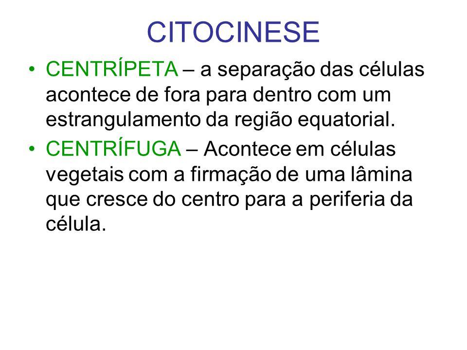 CITOCINESE CENTRÍPETA – a separação das células acontece de fora para dentro com um estrangulamento da região equatorial. CENTRÍFUGA – Acontece em cél