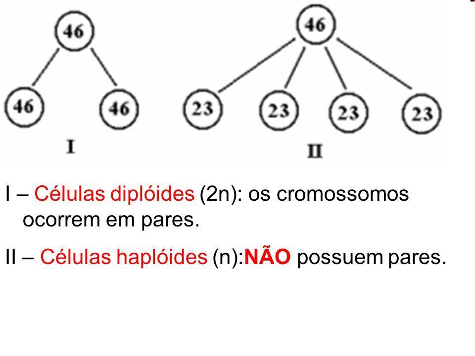 I – Células diplóides (2n): os cromossomos ocorrem em pares. II – Células haplóides (n):NÃO possuem pares.
