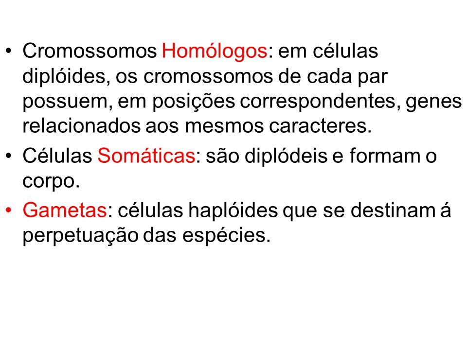 Cromossomos Homólogos: em células diplóides, os cromossomos de cada par possuem, em posições correspondentes, genes relacionados aos mesmos caracteres