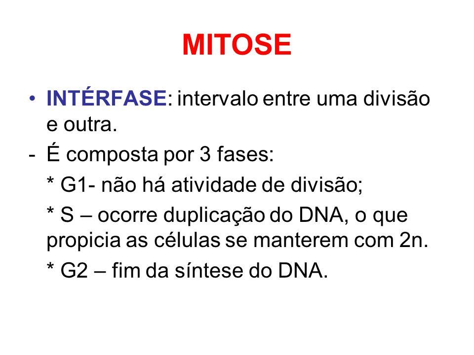 MITOSE INTÉRFASE: intervalo entre uma divisão e outra. -É composta por 3 fases: * G1- não há atividade de divisão; * S – ocorre duplicação do DNA, o q