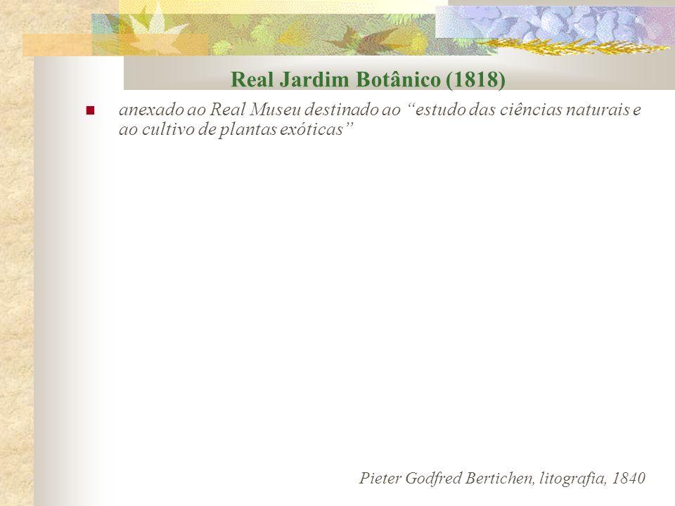Real Jardim Botânico Primeiro botânico a ser diretor: Frei Leandro (1824) Papel do Jardim Botânico: trocas de espécies, realizar experimentos botânicos e classificações científicas.