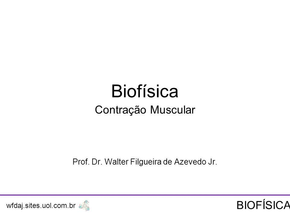 Biofísica Contração Muscular Prof.Dr. Walter Filgueira de Azevedo Jr.