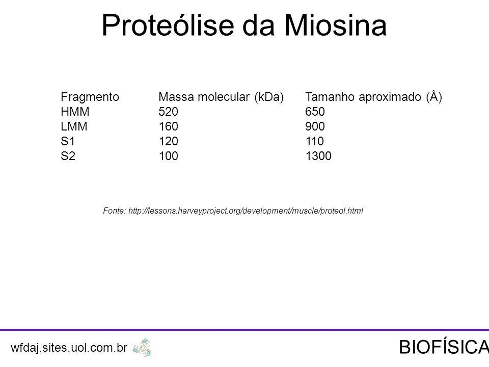 Fonte: http://lessons.harveyproject.org/development/muscle/proteol.html FragmentoMassa molecular (kDa)Tamanho aproximado (Å) HMM520650 LMM160900 S1120110 S21001300 Proteólise da Miosina wfdaj.sites.uol.com.br BIOFÍSICA