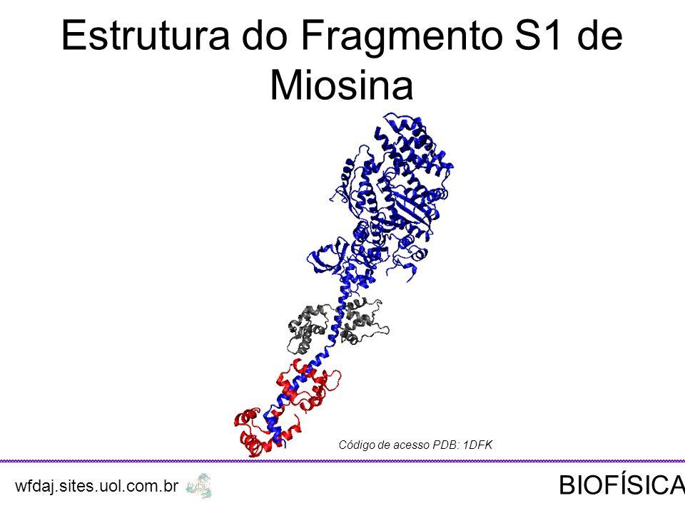 Estrutura do Fragmento S1 de Miosina Código de acesso PDB: 1DFK wfdaj.sites.uol.com.br BIOFÍSICA