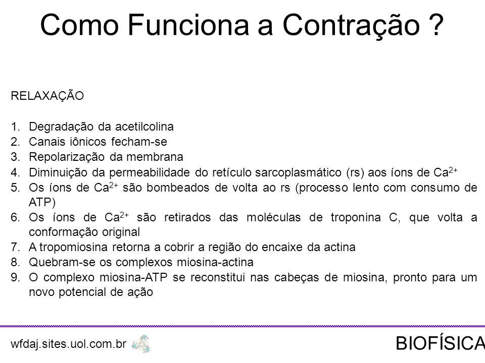 Como Funciona a Contração .RELAXAÇÃO 1.Degradação da acetilcolina 2.