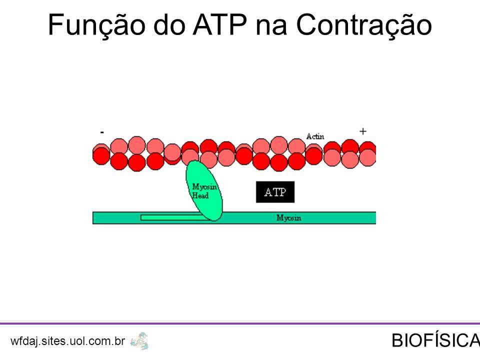 Função do ATP na Contração wfdaj.sites.uol.com.br BIOFÍSICA