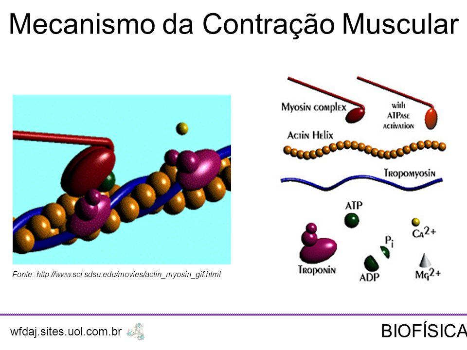 Fonte: http://www.sci.sdsu.edu/movies/actin_myosin_gif.html Mecanismo da Contração Muscular wfdaj.sites.uol.com.br BIOFÍSICA