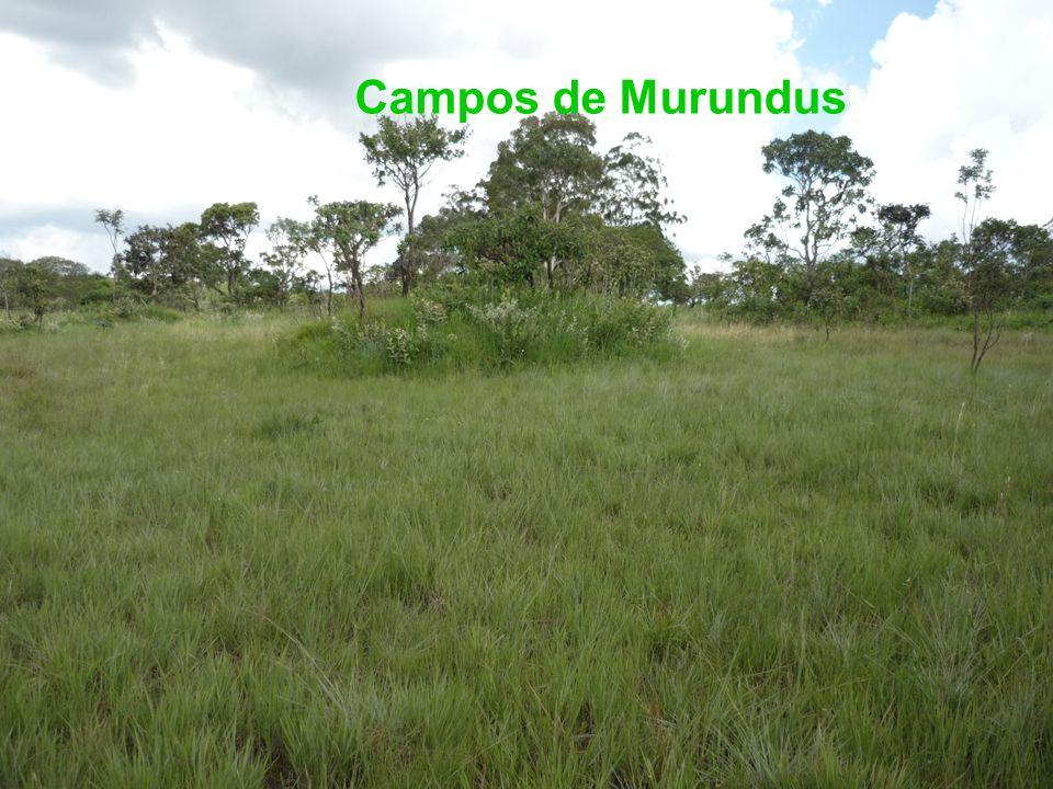 Campos de Murundus