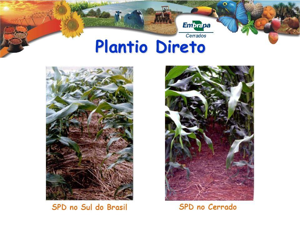 Plantio Direto SPD no Sul do Brasil SPD no Cerrado