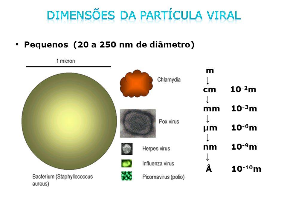m cm 10 -2 m mm 10 -3 m µm 10 -6 m nm 10 -9 m Ǻ 10 -10 m Pequenos (20 a 250 nm de diâmetro)