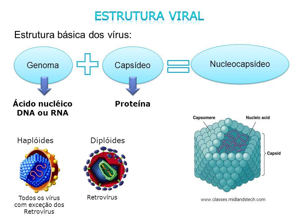 Estrutura básica dos vírus: Genoma Capsídeo Nucleocapsídeo Ácido nucléico DNA ou RNA Proteína www.classes.midlandstech.com Haplóides Diplóides Retroví
