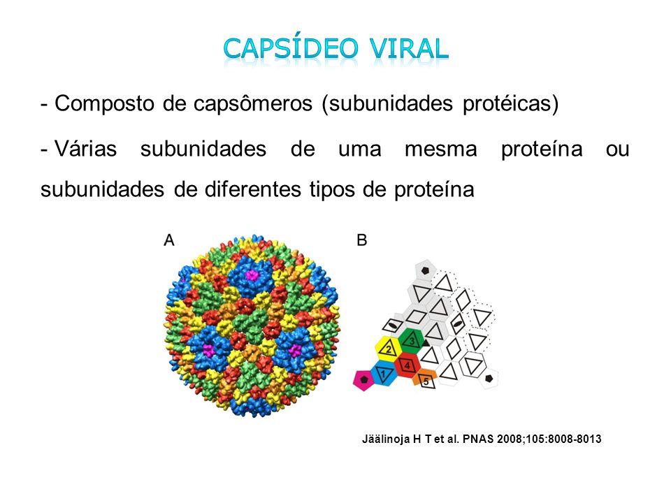 - Composto de capsômeros (subunidades protéicas) - Várias subunidades de uma mesma proteína ou subunidades de diferentes tipos de proteína Jäälinoja H