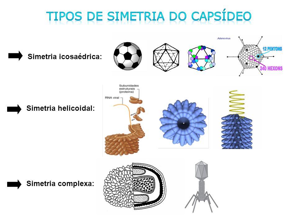 Simetria icosaédrica: Simetria helicoidal: Simetria complexa: