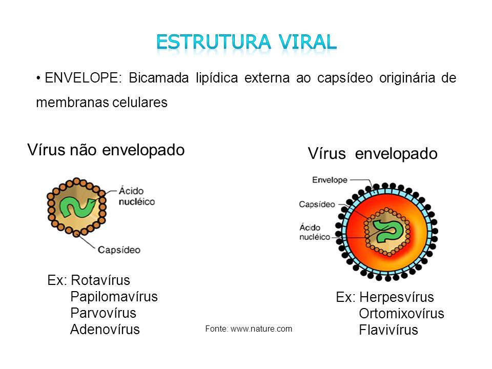 Ex: Rotavírus Papilomavírus Parvovírus Adenovírus Ex: Herpesvírus Ortomixovírus Flavivírus Fonte: www.nature.com Vírus não envelopado Vírus envelopado