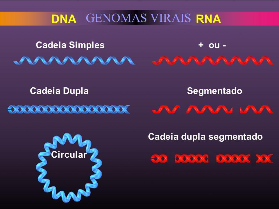 GENOMAS VIRAIS DNA RNA Cadeia Simples Cadeia Dupla Circular + ou - Segmentado Cadeia dupla segmentado