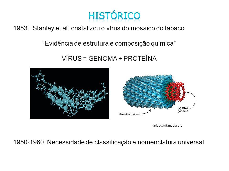 1953: Stanley et al. cristalizou o vírus do mosaico do tabaco Evidência de estrutura e composição química VÍRUS = GENOMA + PROTEÍNA 1950-1960: Necessi