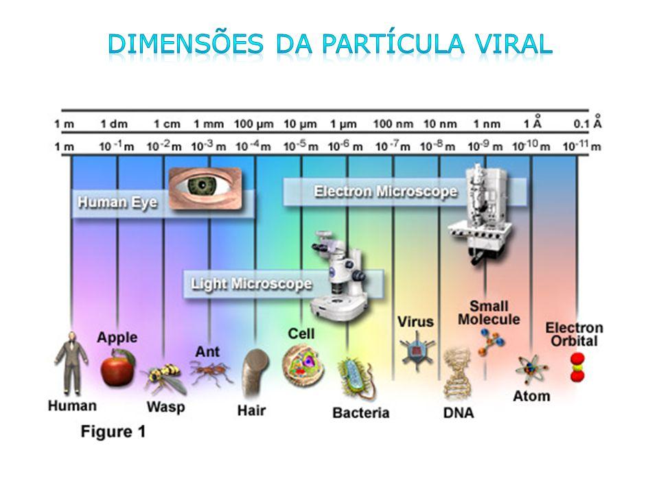 Grupos de vírus de acordo com critérios epidemiológicos Hepatites virais: Vírus das hepatites A-E Hepatites virais: Vírus das hepatites A-E Vírus respiratórios: Influenza, rinovírus, RSV, Parainfluenza, Coronavírus, Adenovírus Vírus respiratórios: Influenza, rinovírus, RSV, Parainfluenza, Coronavírus, Adenovírus Arbovírus: Flavivírus, Togavírus, Arenavírus, Buniavírus Arbovírus: Flavivírus, Togavírus, Arenavírus, Buniavírus Vírus de transmissão sexual: HBV, HIV, CMV, HPV Vírus de transmissão sexual: HBV, HIV, CMV, HPV Gastroenterites virais: Astrovirus, Calicivirus, Rotavirus, Coronavírus, Norovírus, Adenovírus Gastroenterites virais: Astrovirus, Calicivirus, Rotavirus, Coronavírus, Norovírus, Adenovírus