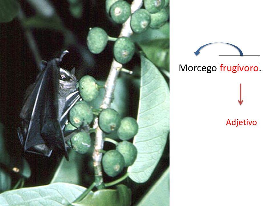 Morcego frugívoro. Adjetivo
