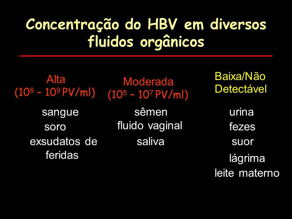 Concentração do HBV em diversos fluidos orgânicos Concentração do HBV em diversos fluidos orgânicos Alta (10 8 – 10 9 PV/ml) Moderada (10 5 – 10 7 PV/