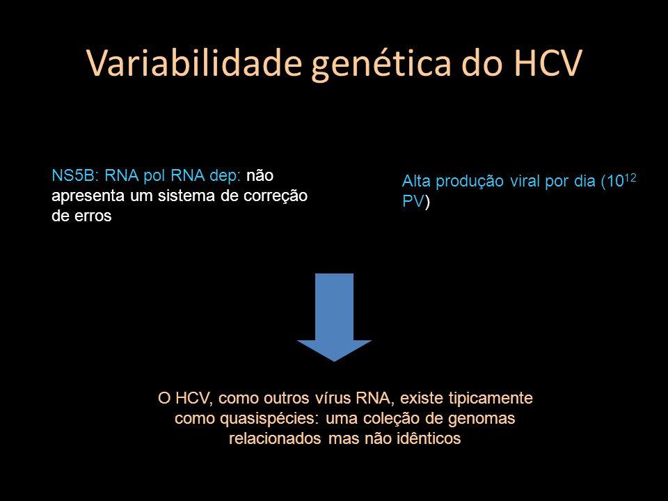 Variabilidade genética do HCV NS5B: RNA pol RNA dep: não apresenta um sistema de correção de erros Alta produção viral por dia (10 12 PV) O HCV, como