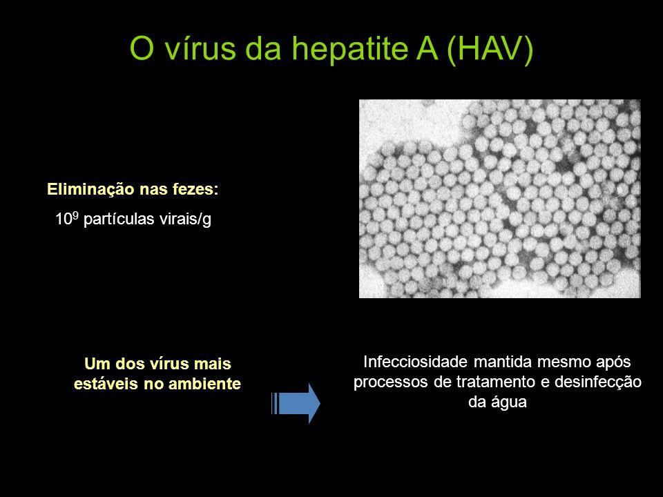 O vírus da hepatite A (HAV) Eliminação nas fezes: 10 9 partículas virais/g Um dos vírus mais estáveis no ambiente Infecciosidade mantida mesmo após pr