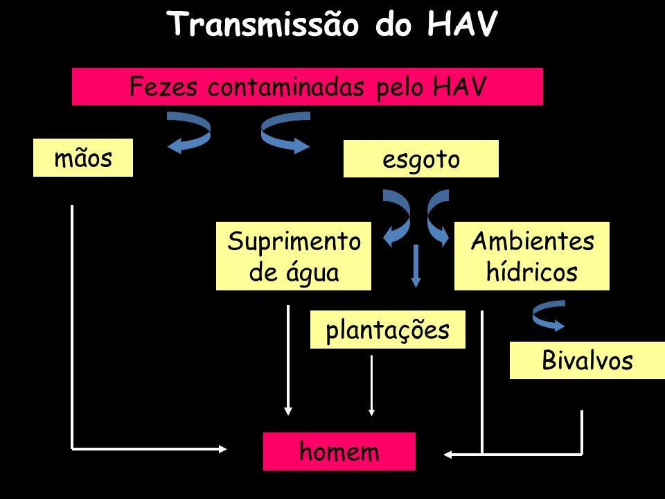 Transmissão do HAV Fezes contaminadas pelo HAV mãos esgoto Suprimento de água Ambientes hídricos Bivalvos homem plantações